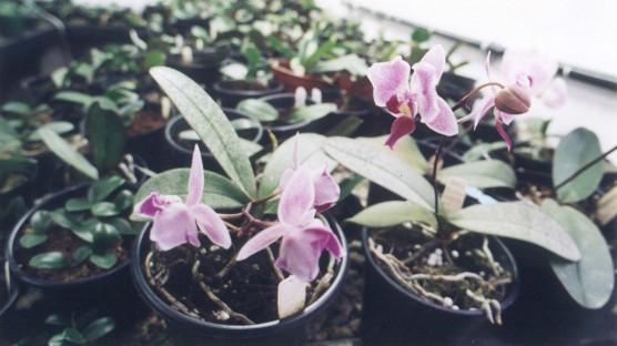 Crescimento do Agronegócio de Flores e Plantas Ornamentais Incentiva Produtores